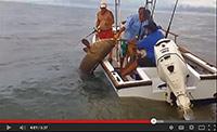 ecord Grouper at Rio Parismina